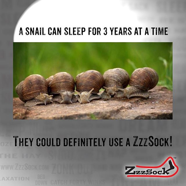 🐌Spread the word about ZzzSock, share this post with all your friends! Fits twin and twin-XL beds. Perfect for all ages, from kids rooms to dorm rooms.  Created by two college kids who know a great night's sleep!  ZzzSock.com . . . 💤😴 . . . . . 👏🏻🎁🛌. . . #dormroom #bedroom #collegeblogger #dormdecor #student #parentblogger #sororitylife #fraternitylife #studentblogger #momlife #dadlife #decorationideas #mombloggers #momblog #mom #dad #sleep #kid #kidapproved #momapproved #dadapproved #businessmindset #dadblogger #mentorship  #countdown #inthe56 #bed #twinbed #sleepy #cozybedroom