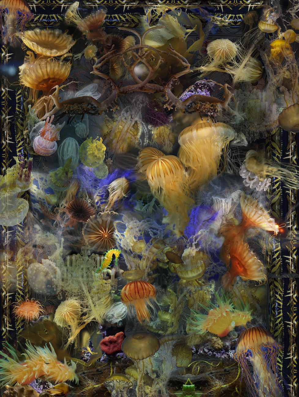 frank_orange_jellyfishthrough_seas_to_seek_48_x_36_digital_photograph.jpg
