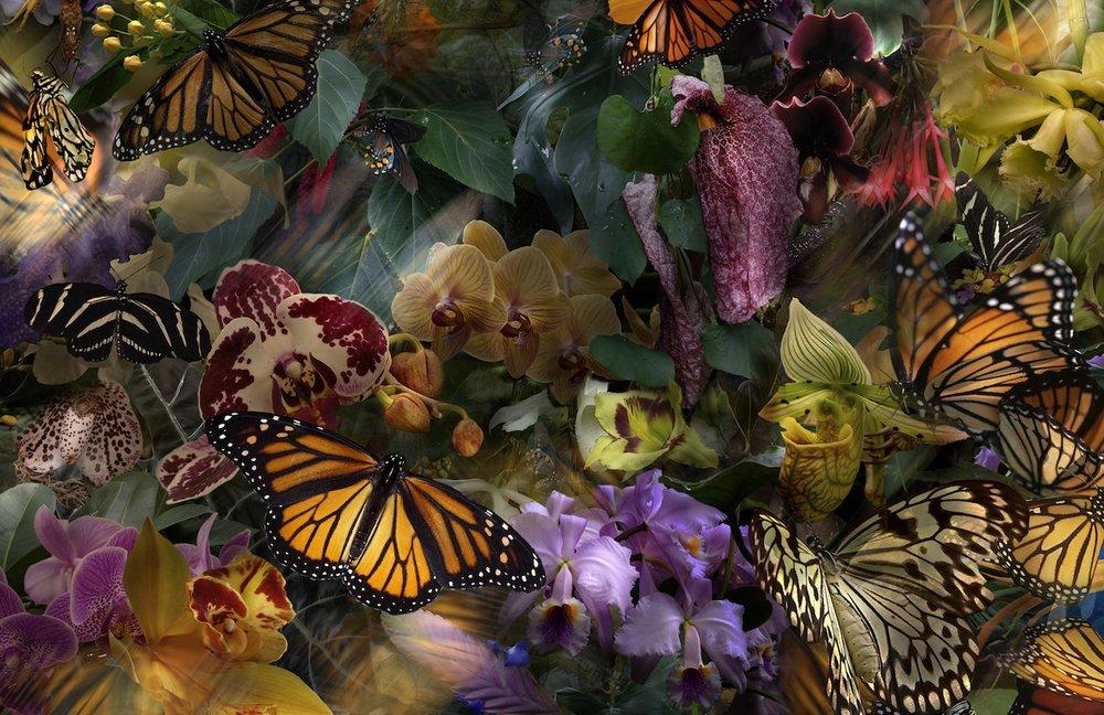 frank_the_stillness_of_monarchs_digital_photography.jpg