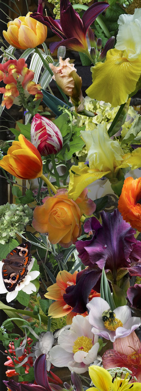 frank_yellow_iris_with_hummingbird_48_x_18_digital_photography.jpg