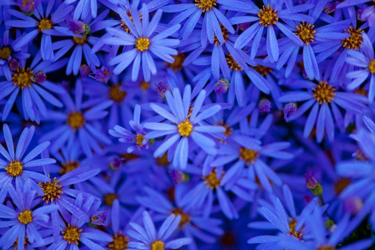 """John Vlahakis' stunning """"Blue Velvet"""""""