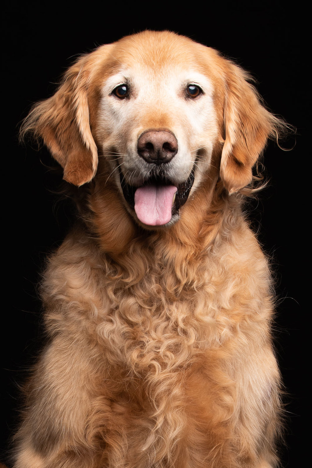 Canine_Therapy_portriats-196_Web.jpg
