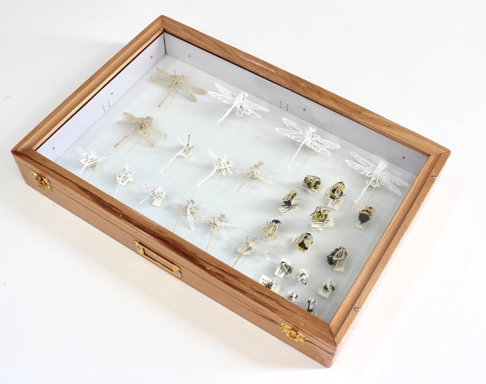Insect Chart-2, 3D-printed plastic, steel pins, paper labels with ink, 12 x 17.75 x 2.5 inches, 2018