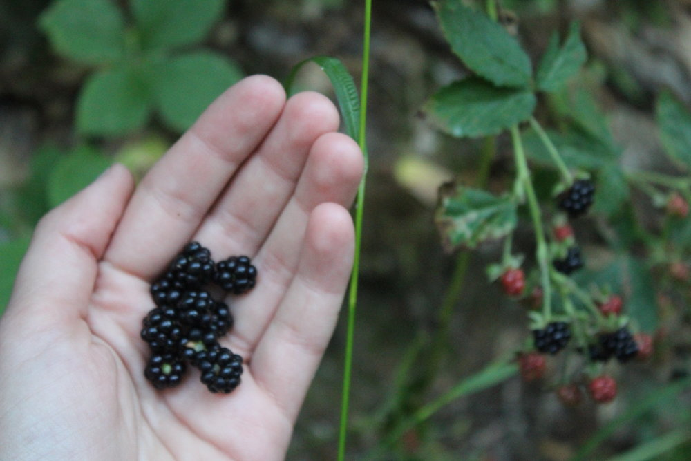 Foraging for fruits on hike. PC: Richelle Gribble