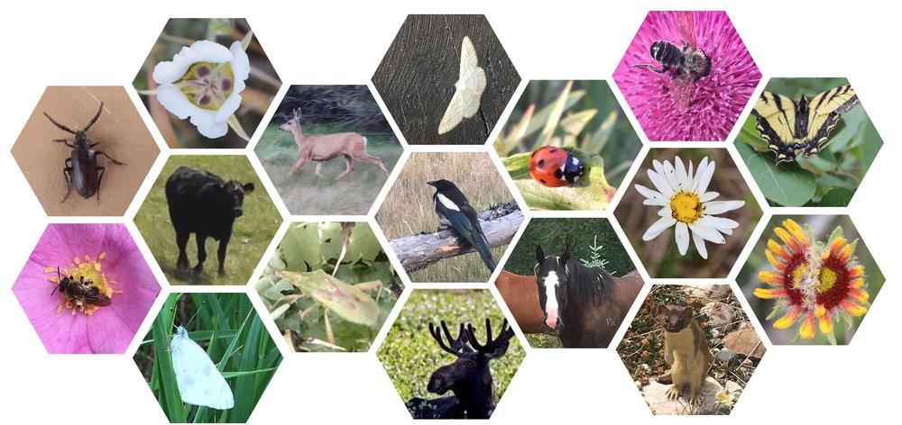 Animals3 2.jpg