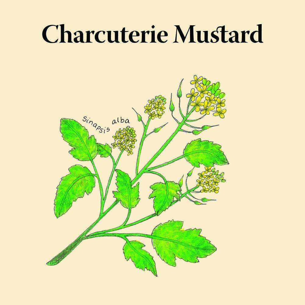 Biota.Charcuterie-Mustard@2x-80.jpg