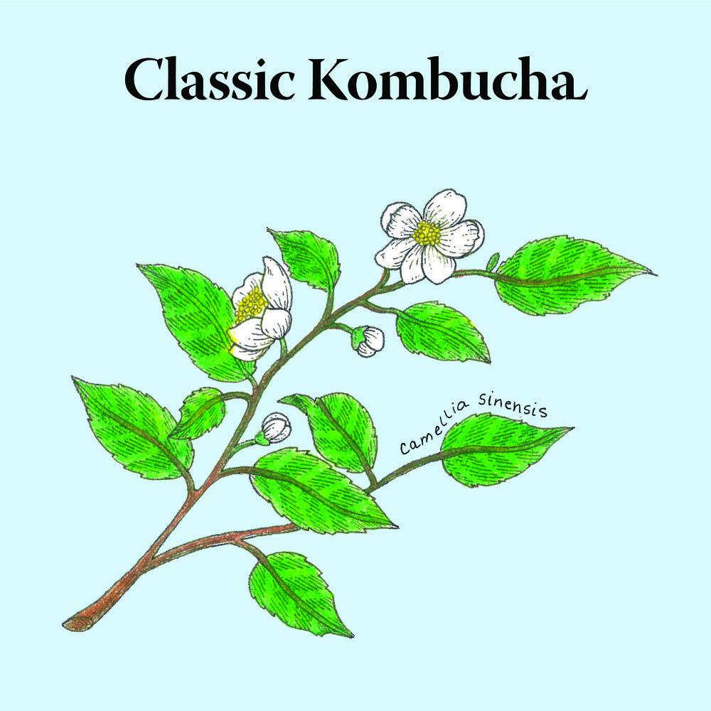 Biota.Classic-Kombucha@2x-80.jpg