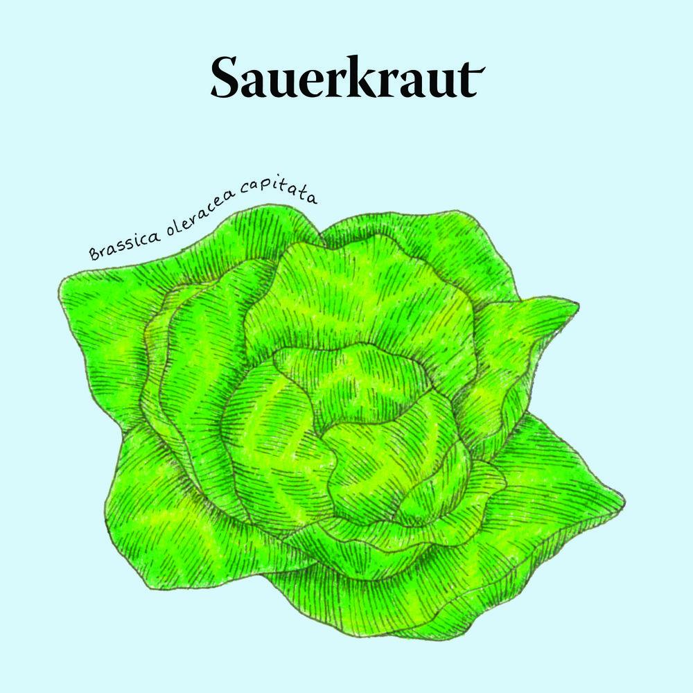 Biota.Sauerkraut@2x-80.jpg