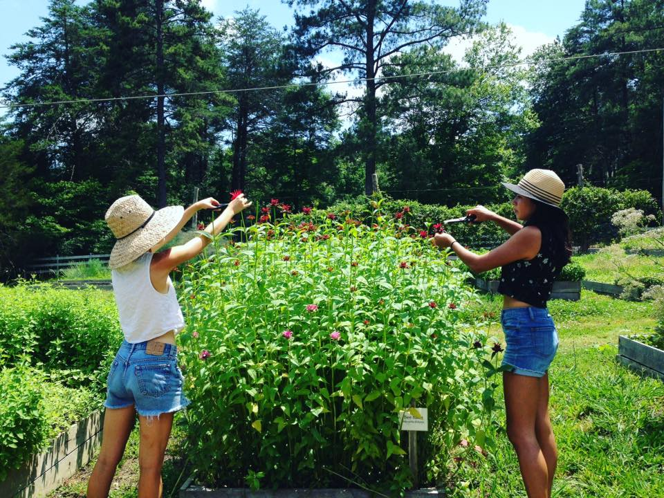 Bee Balm harvest - Copy.jpg