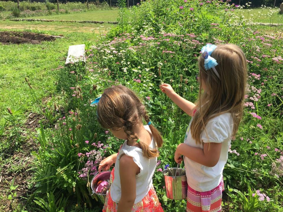 Yarrow harvest little girls.jpg
