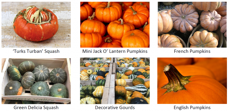 Pumpkin-2-768x374.png