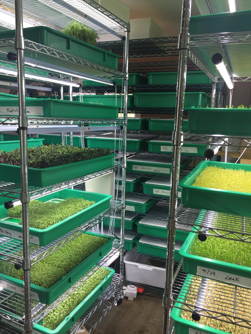 At Green Spirit Living Farm, we're all about growing the tastiest, healthiest microgreens just for you. -