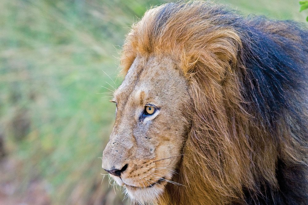 Africa - Discover people, cities, and wildlife with an Adventures by Disney vacation to South Africa.