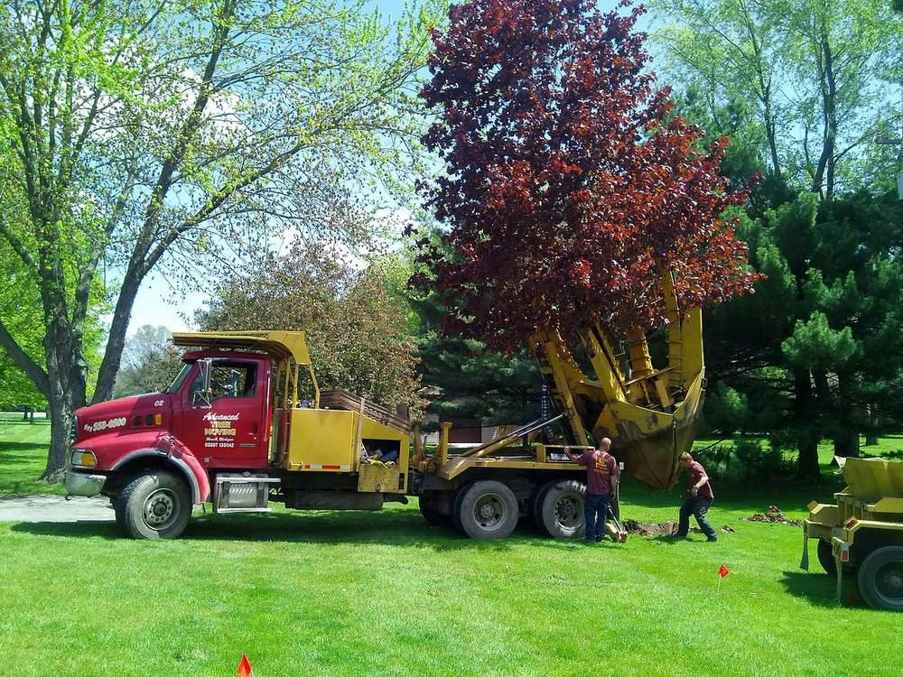 Transplant Trees - We can transplant your trees within your yard or from one property to another. We own pod trailers for all of our trucks allowing us to transplant multiple trees at one time making the longer distance moves much more efficient and affordable. We take great care in preparing the trees for transplanting with our specialized equipment.