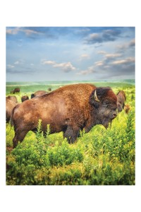 Elements of Advertising Photography Color | Kansas Department of Wildlife, Parks & Tourism | jones huyett Partners | The jhP Team