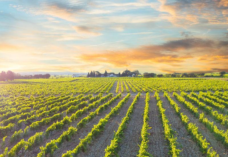 chateauneuf-du-pape-wine-1.jpg