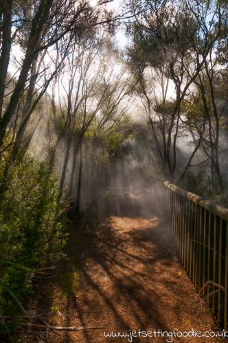 Mystical Kuirau: Very atmospheric with all the steam in the park and rays of sunlight