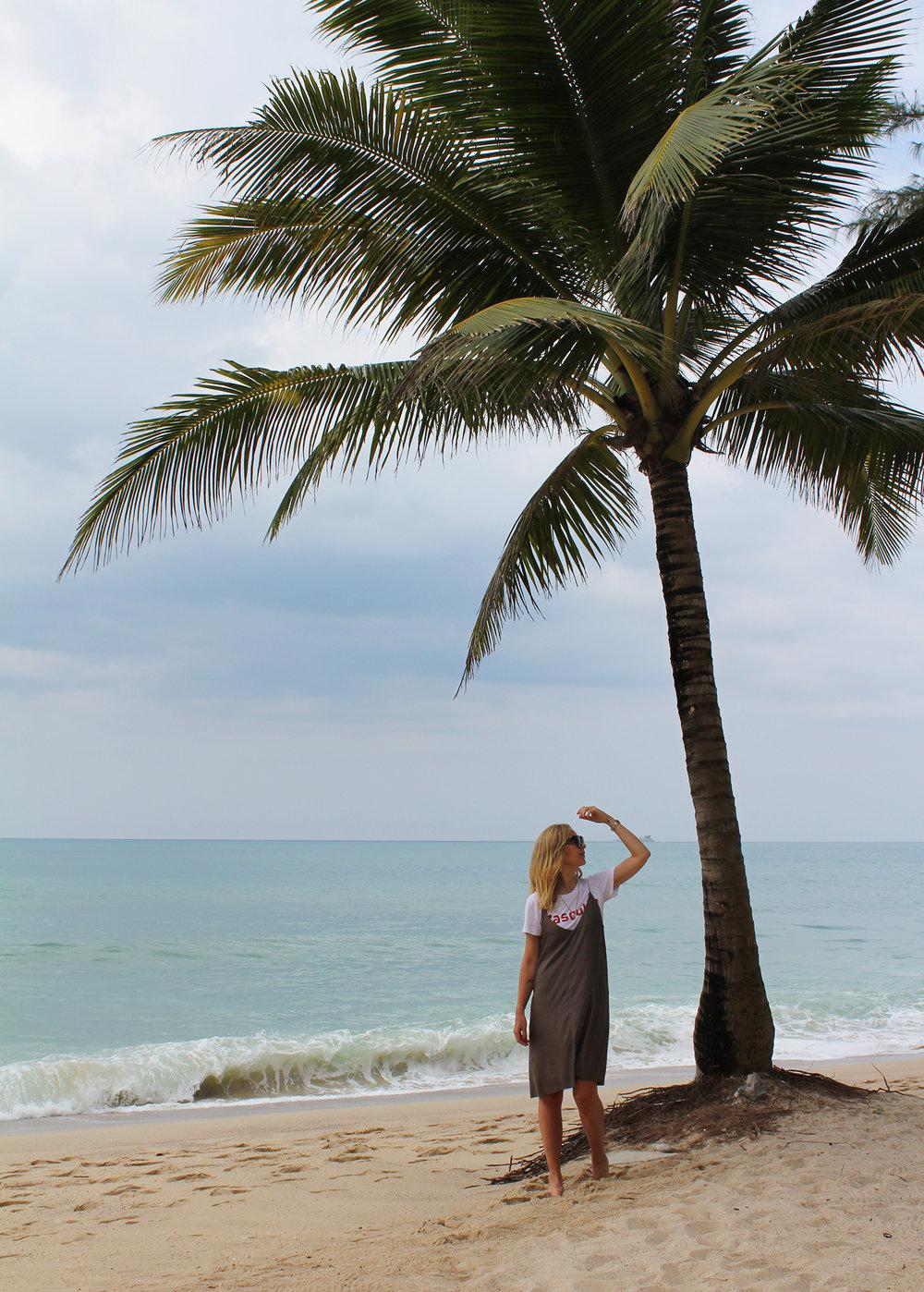 bang tao beach palmtree 01.jpg