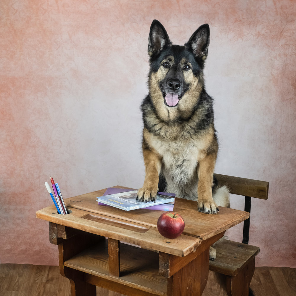 hund sitter vid skolbänk