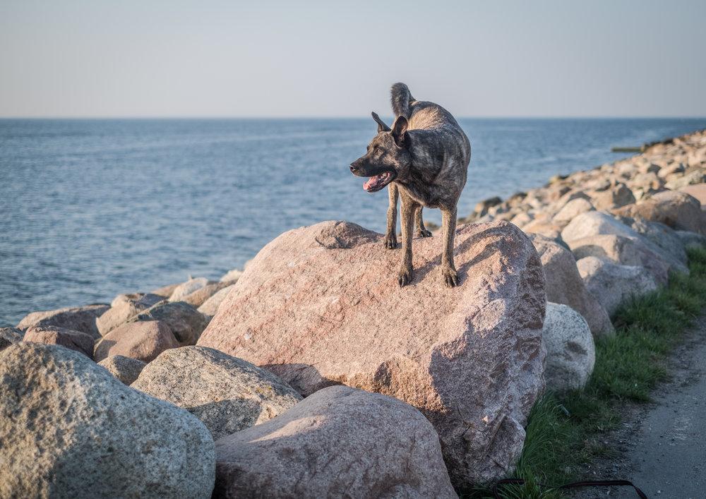 hund solnedgång malmö fotograf hundfotograf