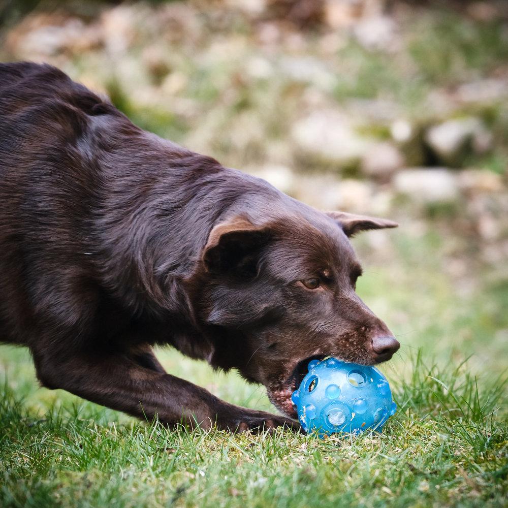 Här har jag valt att förfokusera på bollen, och fånga precis när hon griper den.