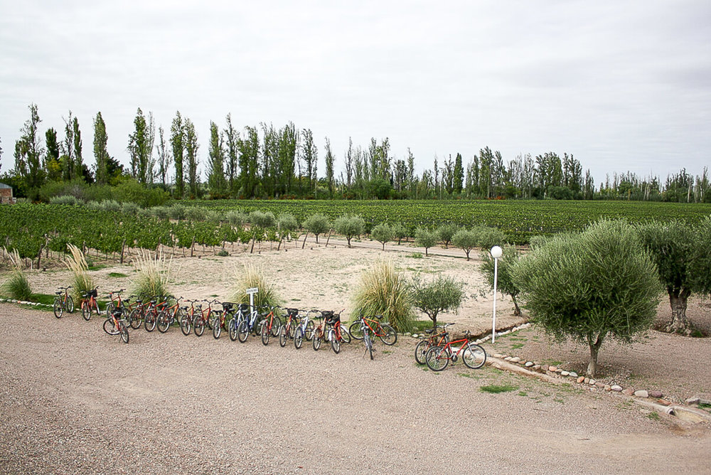Bike rentals in Mendoza in Maipu