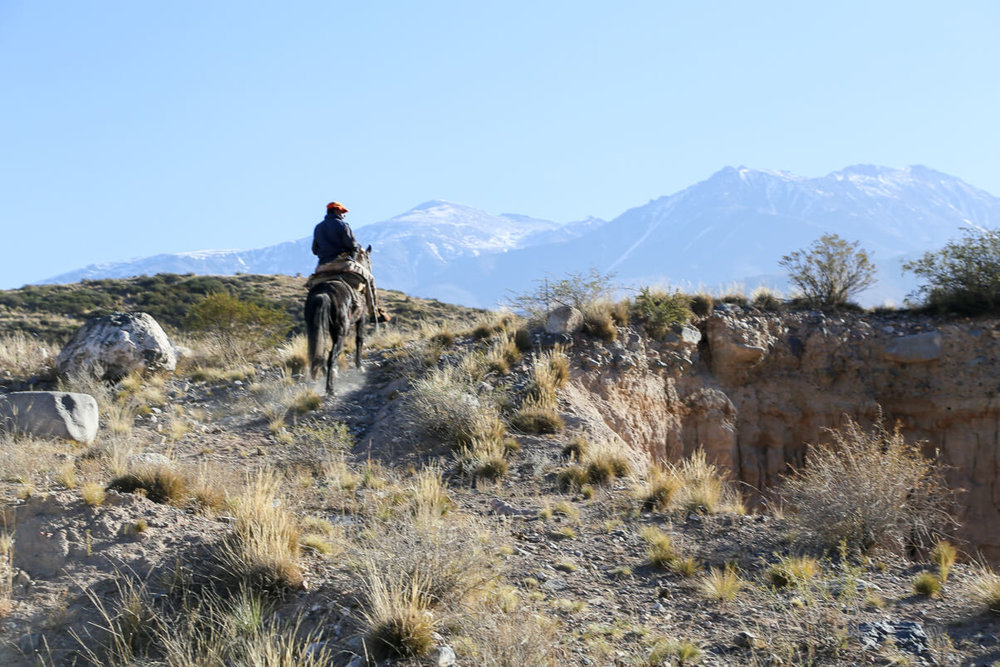 Horseback riding in Mendoza, guided horseback tour