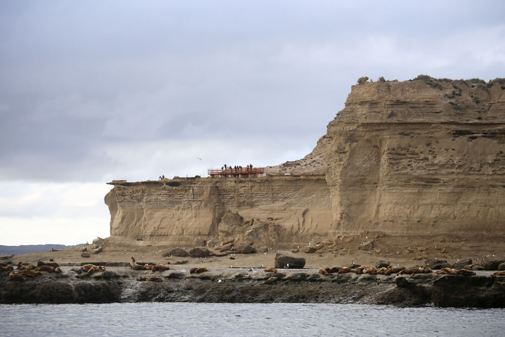 Puerto Piramides Sea Lion Colony