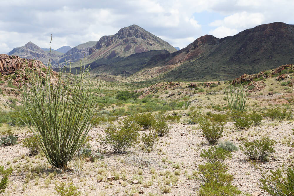 A complete guide to visitng Big Bend National Park in West Texas #NationalParks #BigBend #Texas