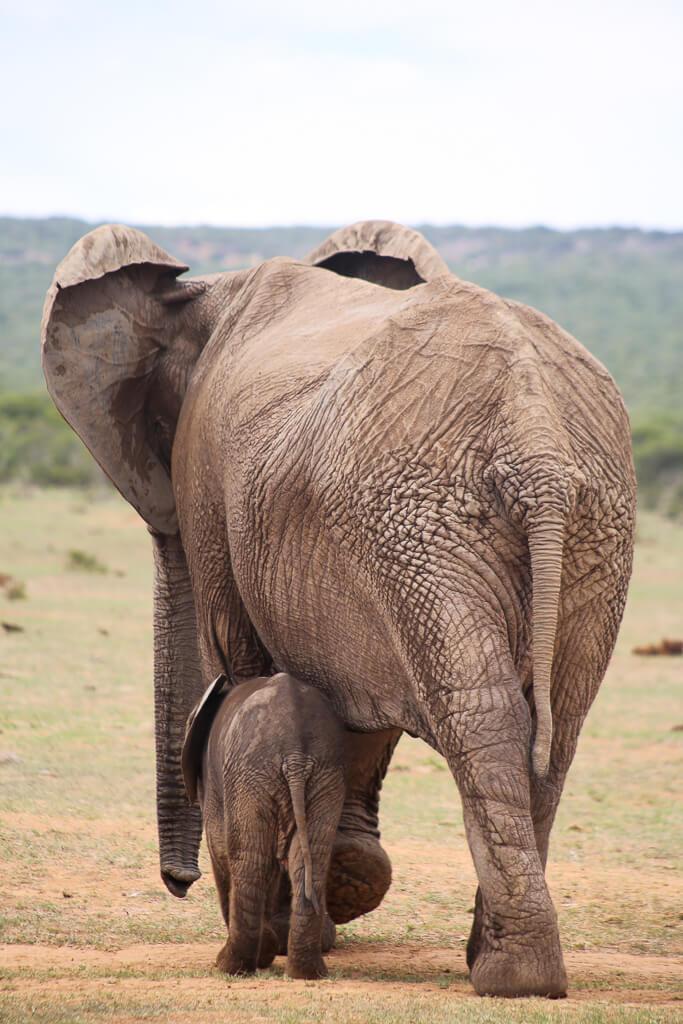 addo national elephant park-19.jpg