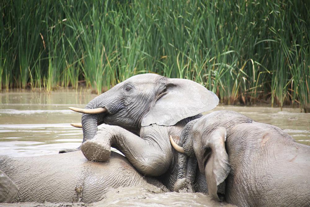 Addo Elephant Park self drive safari advice