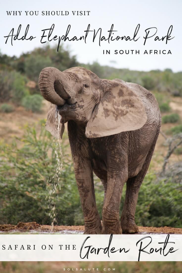 Addo Elephant National Park (1).jpg