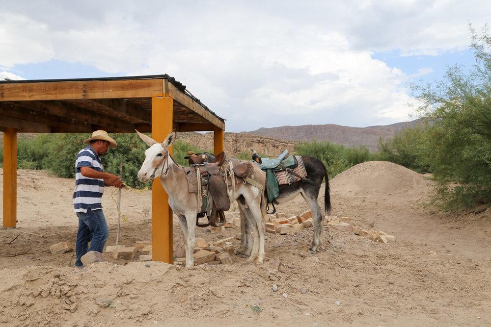 Donkeys in Boquillas