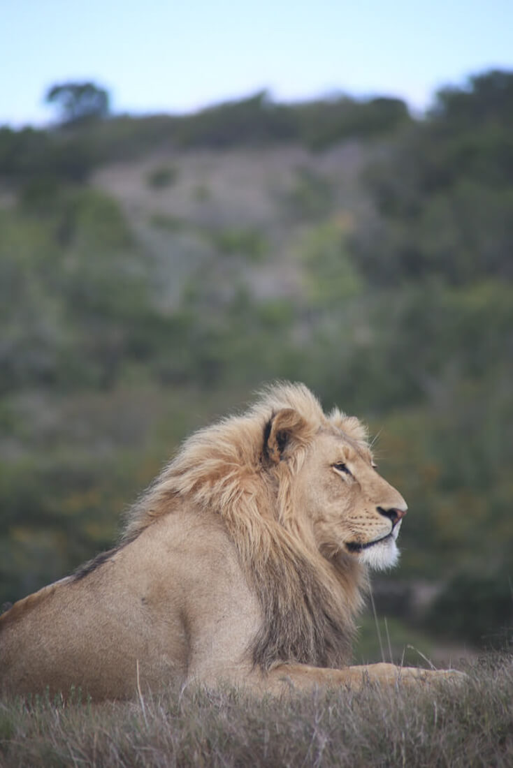 one month in south africa safari