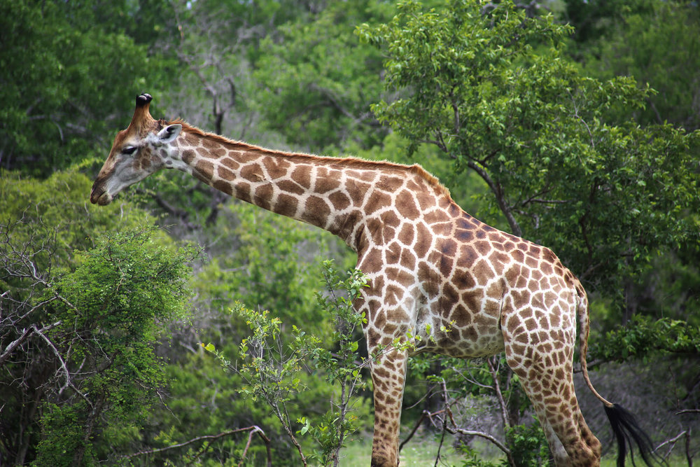 Kruger National Park in January was lush and green.