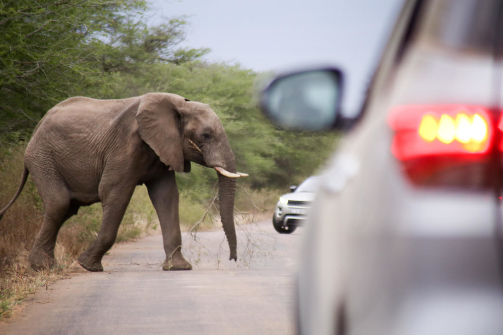 Visiting Kruger National Park on a road trip