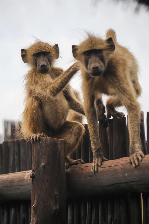Kruger National Park-22.jpg