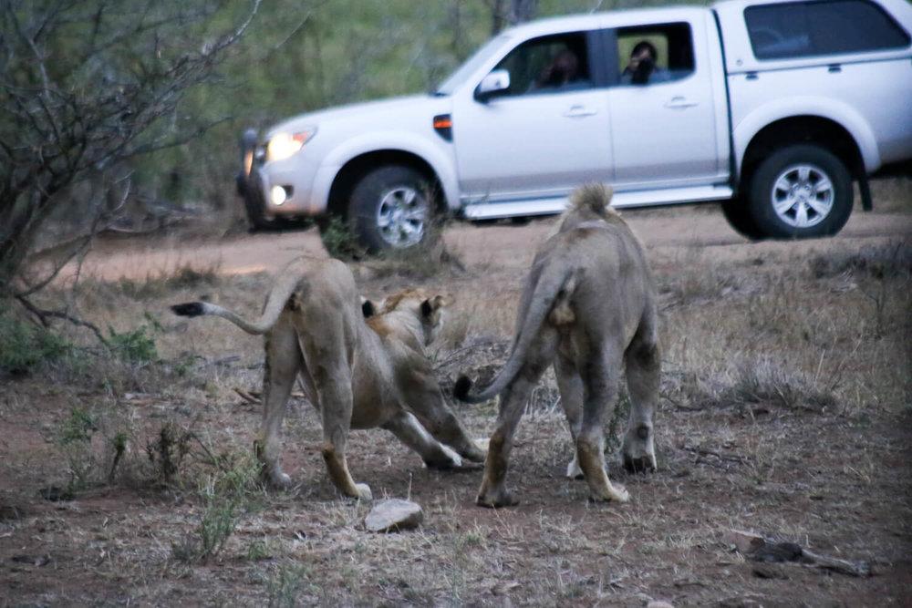 Kruger National Park pictures