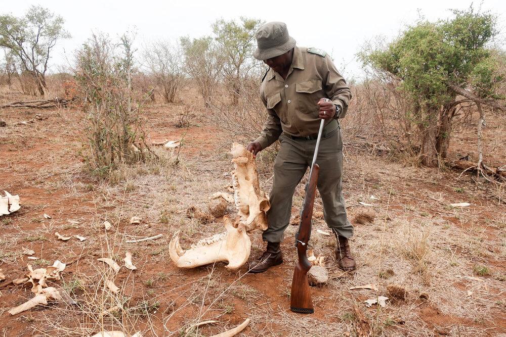 Bush walk in Kruger National Park