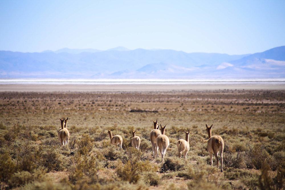 Salta and Jujuy Road trip across northwest argentina