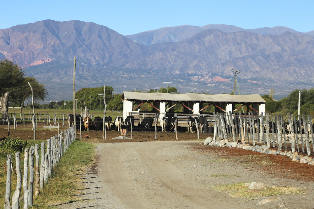 The goat farm is one of the cool things to do in Cafayate Argentina