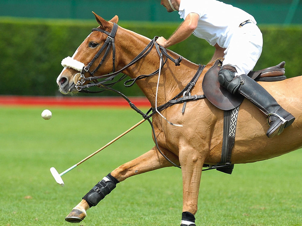 Learn Polo in Buenos Aires | Source: Samuel Ren Halifax © 123RF.com