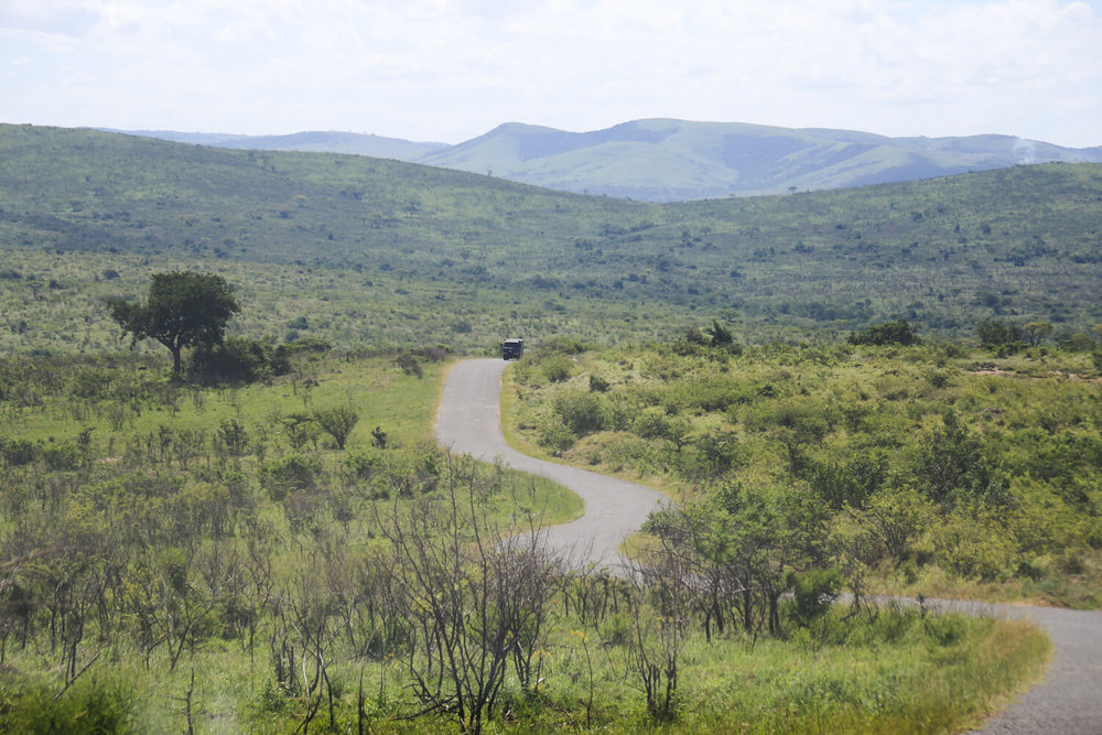 The rolling green hills in a safari park in South Africa in two weeks