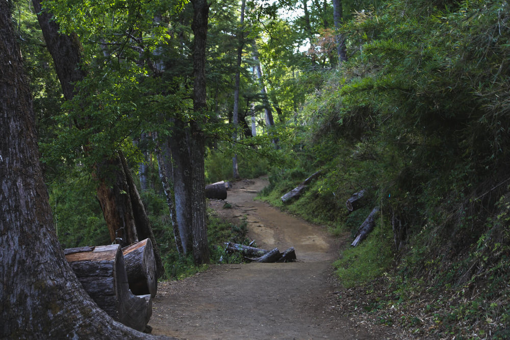 A dirt path winds through the forest in san martin de los andes argentina