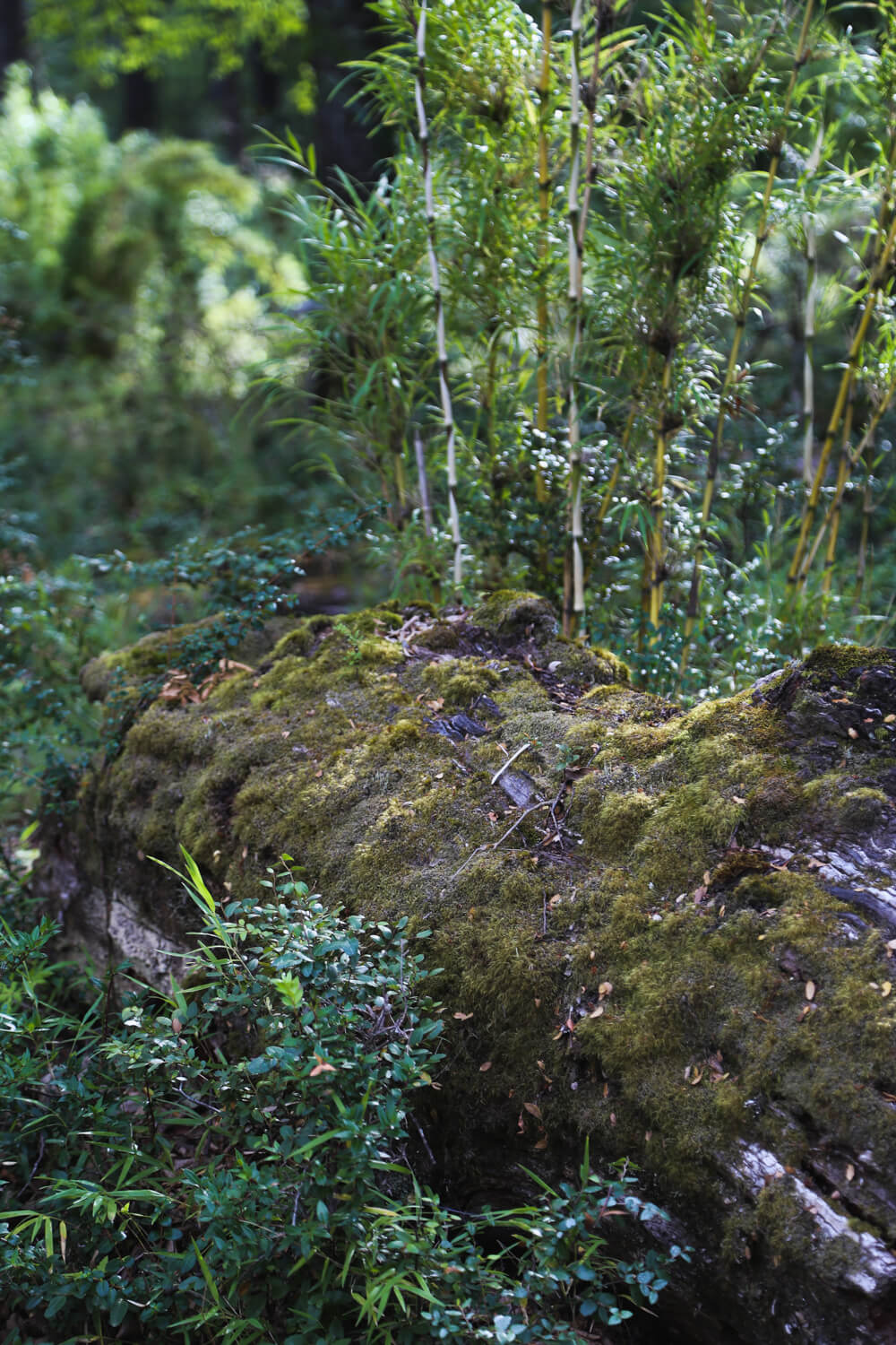 A fallen tree trunk lays on the ground with green moss growing on it