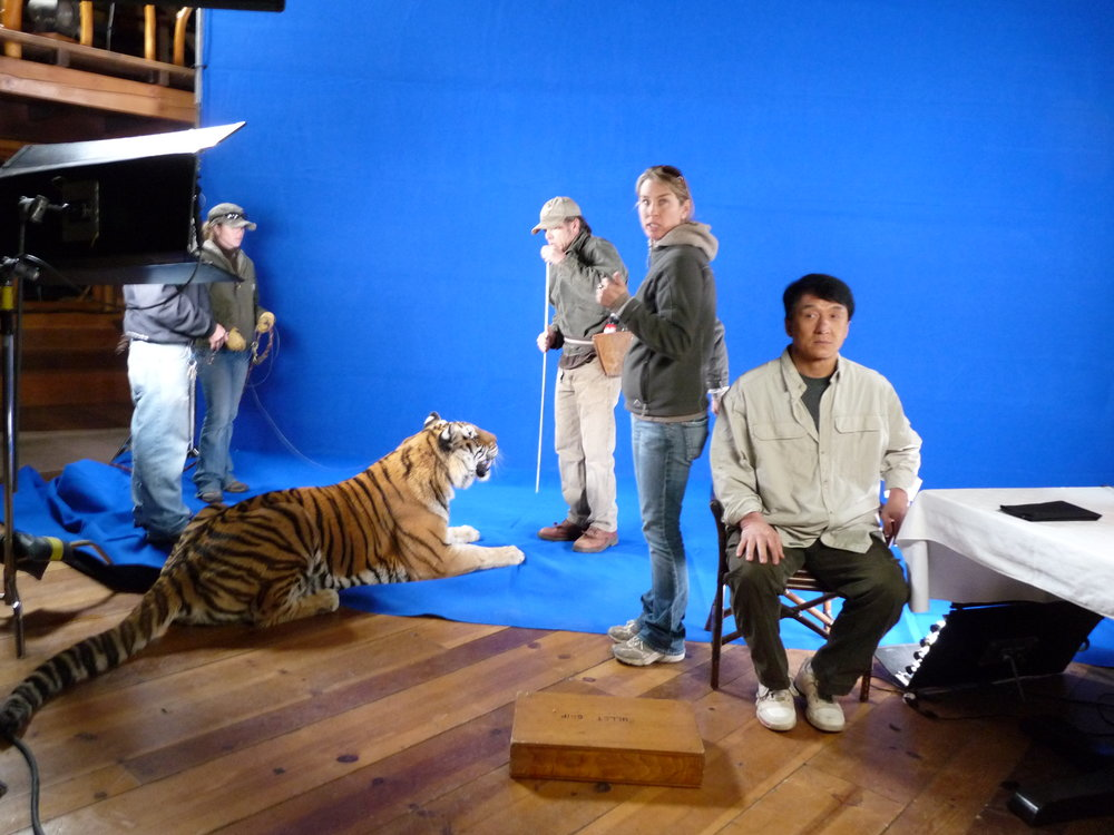 Jackie Chan not too sure about that tiger. Commercial.
