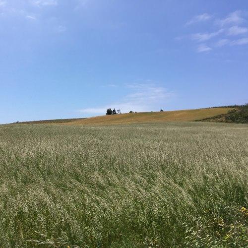 Alentejo field.jpg