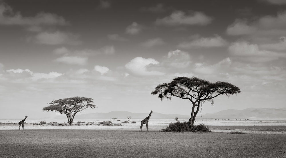 ABiggs_091414_Amboseli116.jpg