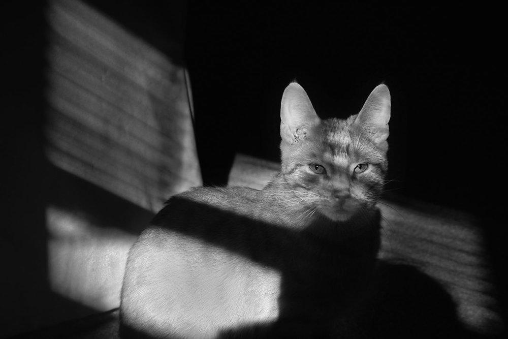 Film Noir #2