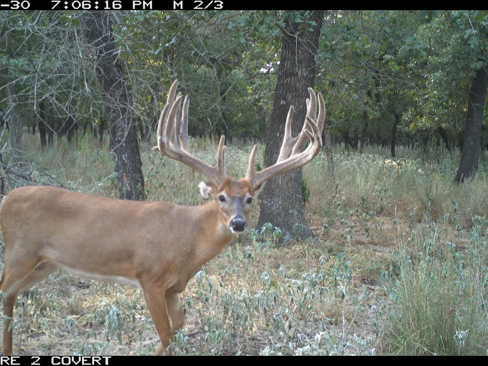 Trail Cam Pictures -